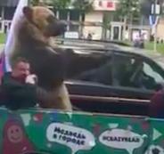 بالفيديو: دب روسي يخرج للشوارع احتفالاً بهزيمة السعودية