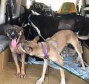 كندا تتبنى 15 كلباً مشردا ً من مدينة بيت لحم