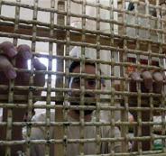 الاسرى المضربين في السجون الاسرائيلية