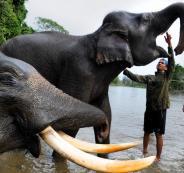 فيل يقتل 14 شخصا في الهند وسكان القرى يلزمون منازلهم خوفا