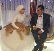 عروس مصرية تصطحب أسداً