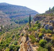 ما هي أكثر المدن الفلسطينية زيارة؟