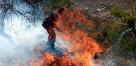 المستوطنون يحرقون اشجار زيتون في الضفة الغربية