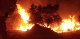 جنين وحرائق اشجار زيتون