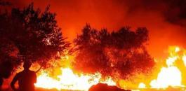 حرائق اشجار زيتون في جنين