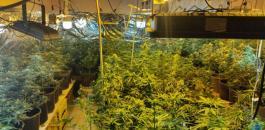 ضبط مستنبت مخدرات في العيزرية