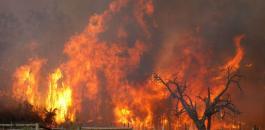 الحرائق في فلسطين