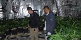 زراعة مخدرات في المناطق الفلسطينية