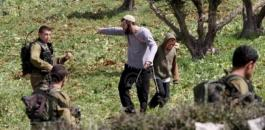 المستوطنون يقطعون اشجار زيتون