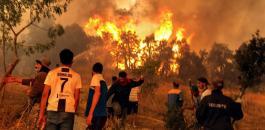حرائق الغابات في الجزائر