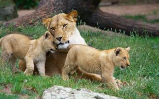 نفوق اربعة اشبال في حديقة حيوانات بغزة