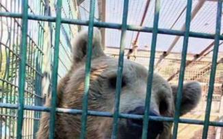 حديقة حيوانات قلقلية