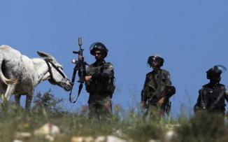مصادرة حمار من مواطن فلسطيني