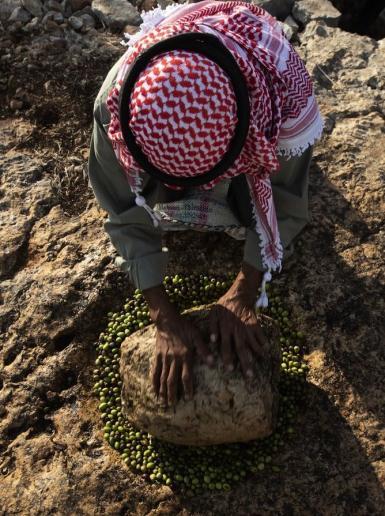 مزارع فلسطيني يعصر الزيتون بطريقة تقليدية في بلدة كفر اللبد شرق طولكرم