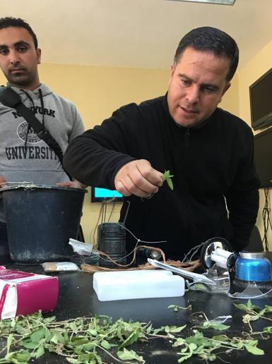 الامن الفلسطيني يضبط شتل مخدرات في بيت لحم