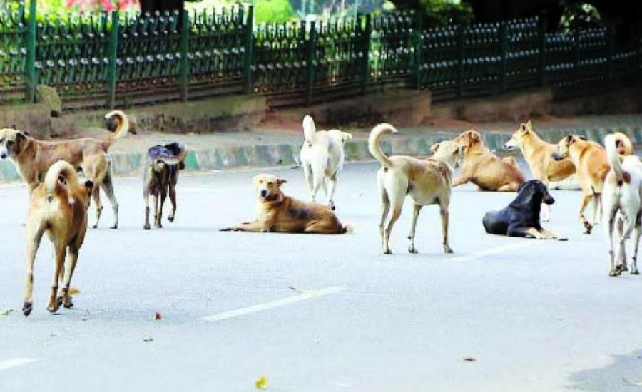 حملة للقضاء على الكلاب الضالة في جنين