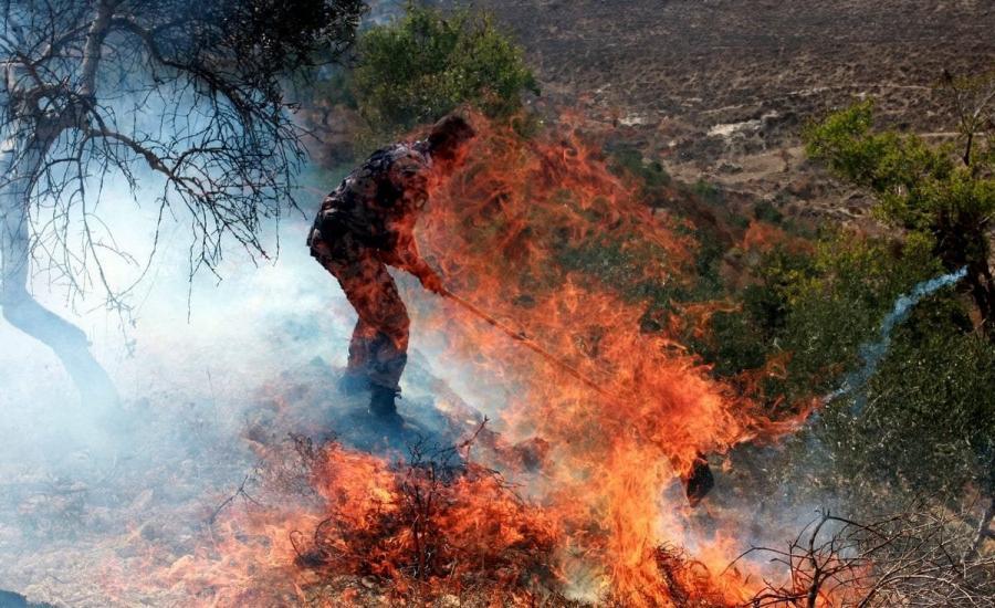 مستوطنون يحرقون اشجار زيتون