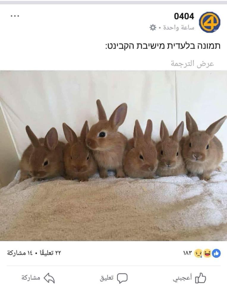 الكابينت والارانب وقطاع غزة