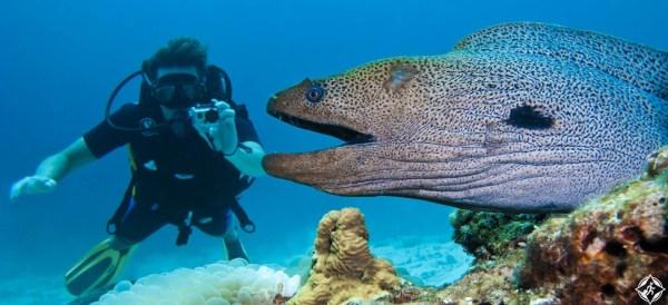 جزيرة-أدو-المرجانية