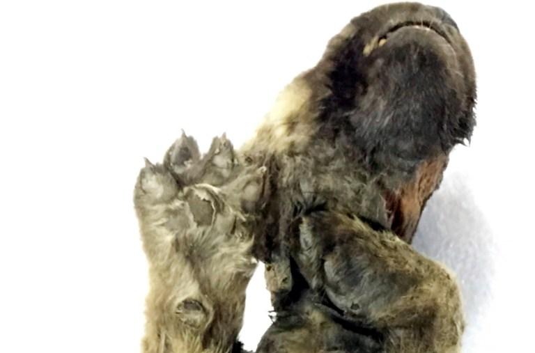 العثور على اقدم كلب في العالم