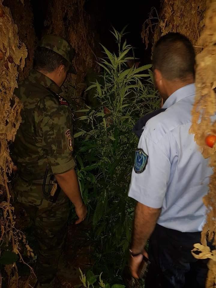 ضبط مشتل مخدرات في سلفيت