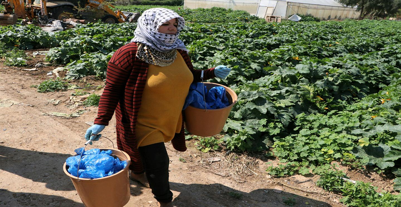 اريحا - المزارعة اتحاد عياد خلال عملها في مزرعتها